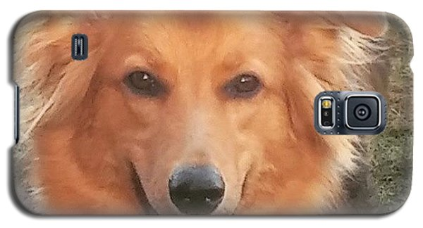 #gsd #germanshepherd #germanshepherddog Galaxy S5 Case by Isabella F Abbie Shores FRSA