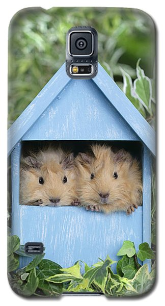 Guinea Pig In House Gp104 Galaxy S5 Case by Greg Cuddiford