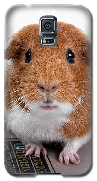 Guinea Pig Talent Galaxy S5 Case by Susan Stone