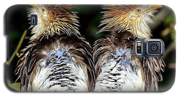 Galaxy S5 Case featuring the photograph Guira Cuckoos by Lisa L Silva