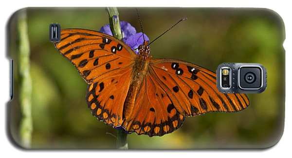 Galaxy S5 Case featuring the photograph Gulf Fritillary Butterfly by Meg Rousher