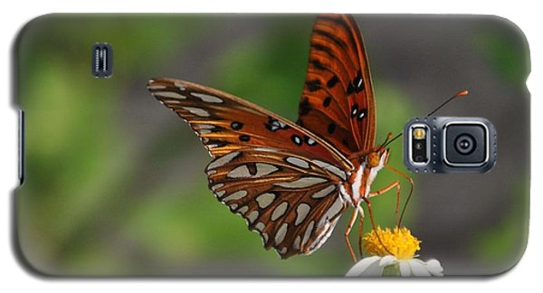 Gulf Fritillary Galaxy S5 Case by Michele Kaiser