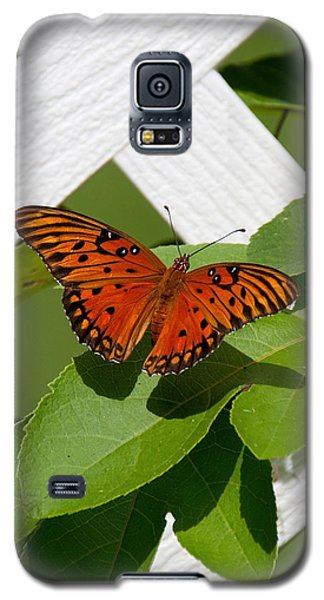 Gulf Fritillary On Passion Flower Vine Galaxy S5 Case