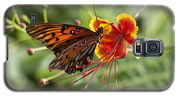 Galaxy S5 Case featuring the photograph Gulf Fritillary Photo by Meg Rousher