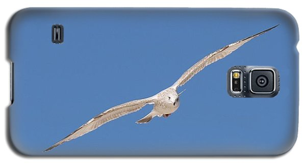 Gull In Flight - 2 Galaxy S5 Case