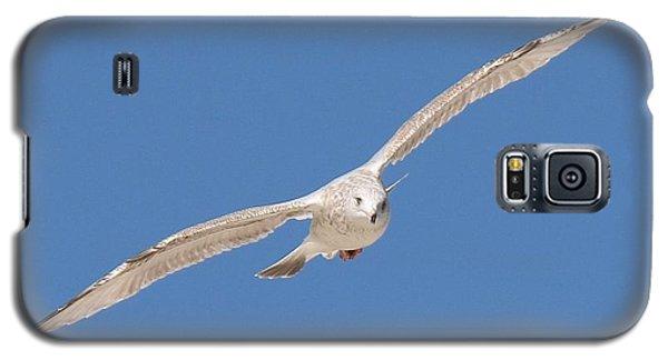 Gull In Flight  Galaxy S5 Case