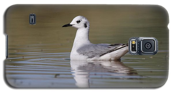 Galaxy S5 Case featuring the photograph Gull In Morning Light by Ruth Jolly