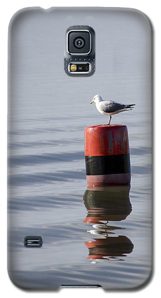 Gull Galaxy S5 Case by Spikey Mouse Photography