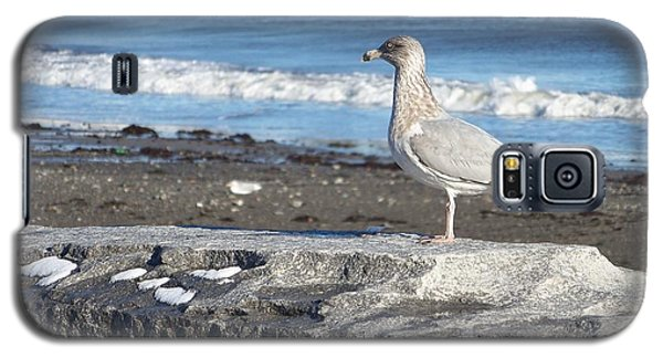 Galaxy S5 Case featuring the photograph Seagull  by Eunice Miller