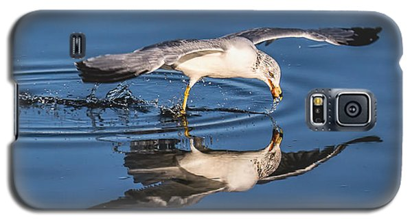 Gull Reflection Galaxy S5 Case by Susi Stroud