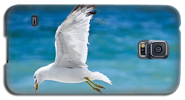 Gull With Fish Galaxy S5 Case by Elaine Manley