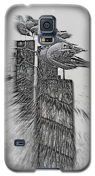 Gulls In Pencil Effect Galaxy S5 Case by Linsey Williams