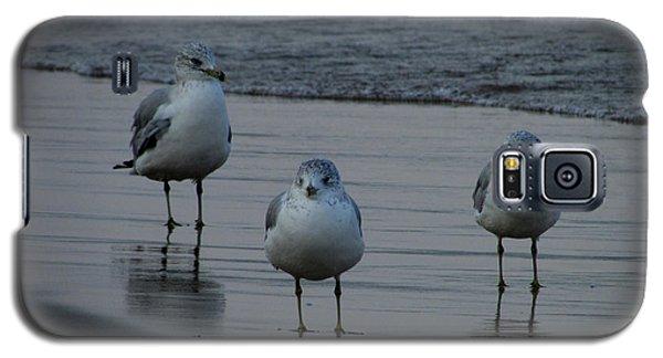 Gulls Night Out Galaxy S5 Case