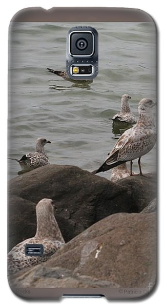 Gulls On The Rocks Galaxy S5 Case by Patricia Overmoyer