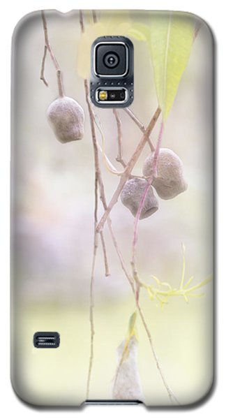 Galaxy S5 Case featuring the photograph Gum Nuts by Elaine Teague