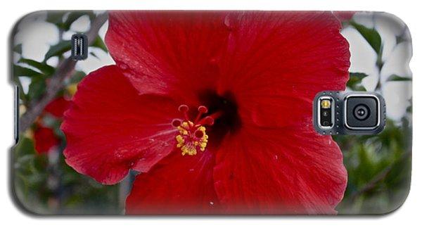Gumamela2 Galaxy S5 Case