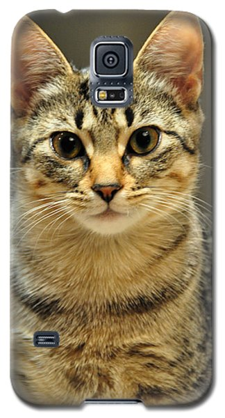 Galaxy S5 Case featuring the photograph Gypsy by Barbara Manis