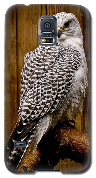 Gyrfalcon Perched Galaxy S5 Case by Steve McKinzie
