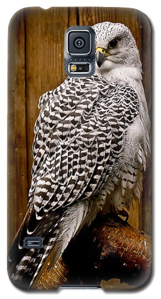 Gyrfalcon Perched Galaxy S5 Case