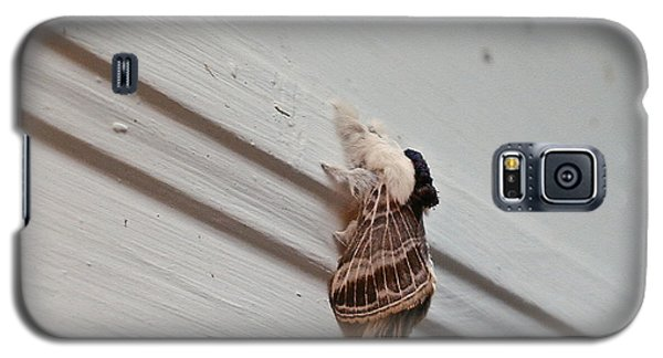 Hairy Russian Moth Galaxy S5 Case