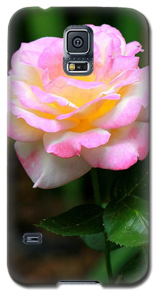 Hand Picked For You Galaxy S5 Case by Deborah  Crew-Johnson