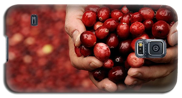 Handful Of Fresh Cranberries Galaxy S5 Case