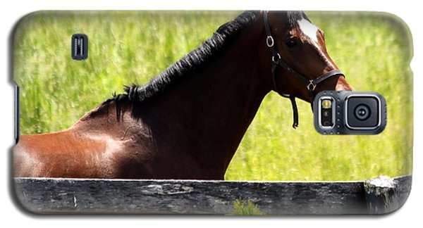 Handsom Horse Galaxy S5 Case