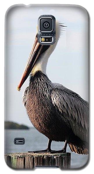 Handsome Brown Pelican Galaxy S5 Case