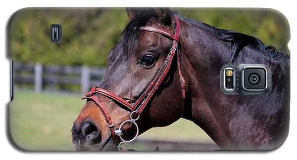 Handsome Gelding Galaxy S5 Case