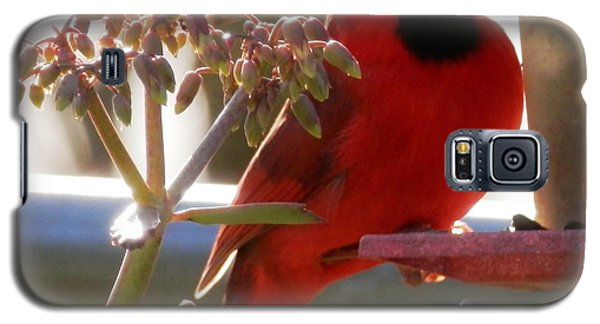 Handsome Red Male Cardinal Visiting Galaxy S5 Case by Belinda Lee