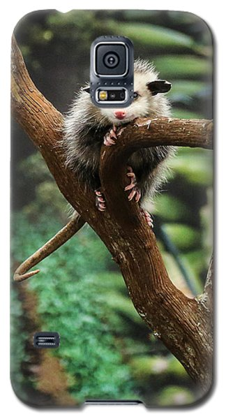Hang In There Baby Galaxy S5 Case