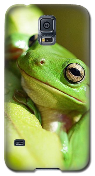 Hang In There Frog Galaxy S5 Case
