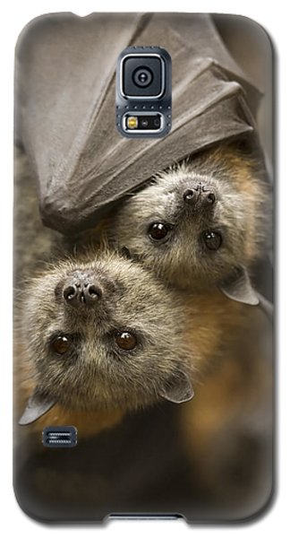 Bat Galaxy S5 Case - Hang In There by Mike  Dawson
