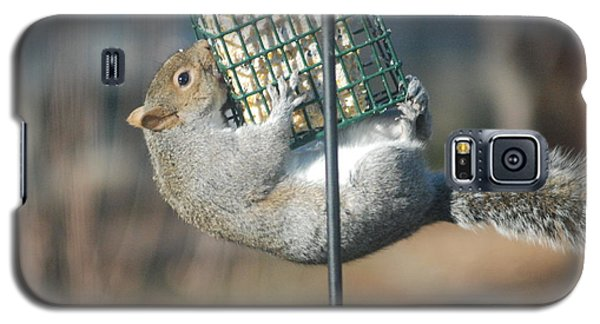 Galaxy S5 Case featuring the photograph Hangin Out by Mark McReynolds