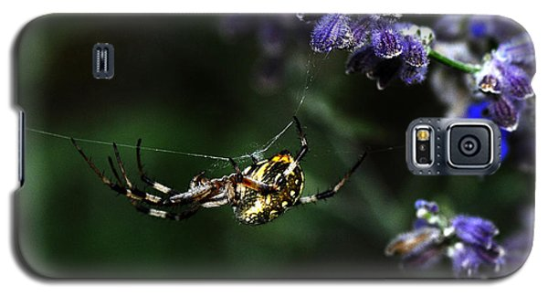 Hanging By A Thread Galaxy S5 Case by Karen Slagle