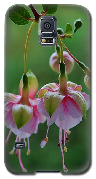 Galaxy S5 Case featuring the photograph Hanging Fuschia by Debra Martz
