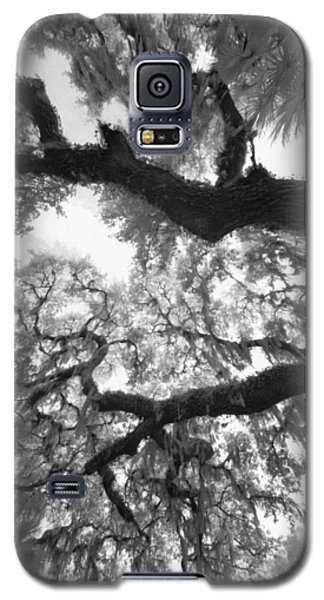Galaxy S5 Case featuring the photograph Hanging Moss by Bradley R Youngberg