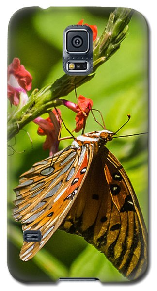 Hanging Off The Side Galaxy S5 Case by Jane Luxton