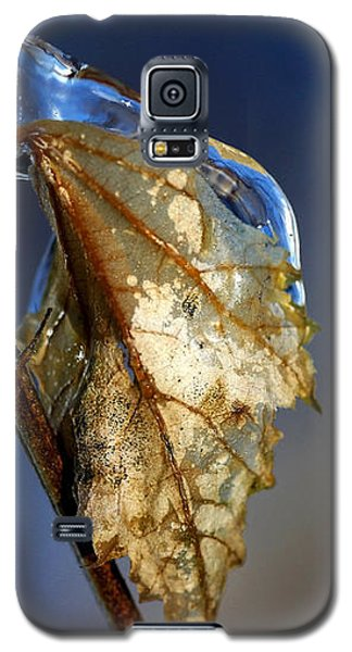 Galaxy S5 Case featuring the photograph The Last Leaf  by Debbie Oppermann