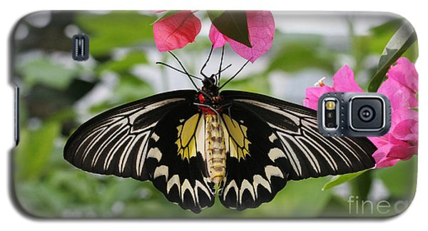 Hanging On Galaxy S5 Case by Judy Whitton