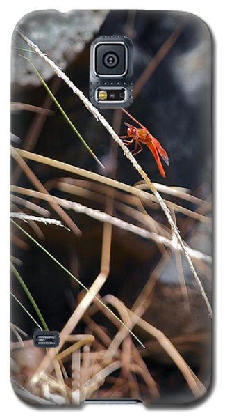Hanging On Galaxy S5 Case by Michele Myers