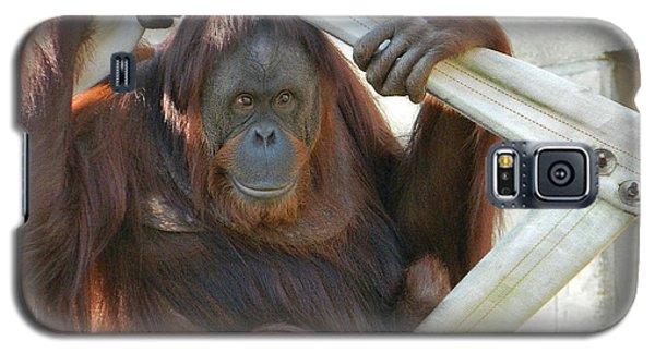 Galaxy S5 Case featuring the photograph Hanging Out - Melati The Orangutan by Emmy Marie Vickers