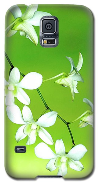 Galaxy S5 Case featuring the photograph Hanging White Orchids by Lehua Pekelo-Stearns