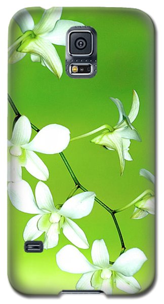 Hanging White Orchids Galaxy S5 Case