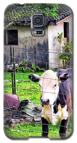Galaxy S5 Case featuring the photograph Hanzawa Cow 1 by Dawn Eshelman