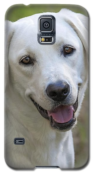 Galaxy S5 Case featuring the photograph Happy Lab by Stephen Anderson