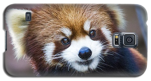 Happy Red Panda Galaxy S5 Case