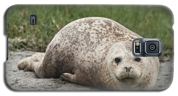 Harbor Seal Galaxy S5 Case
