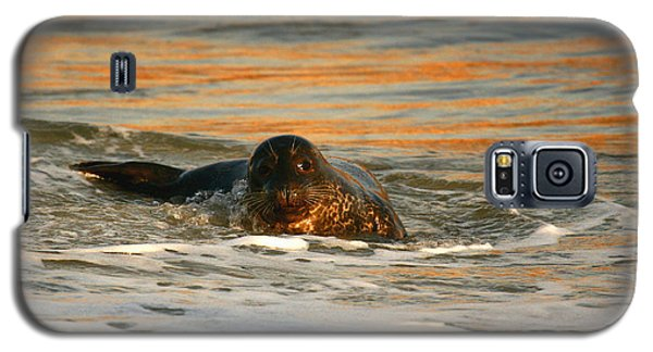 Galaxy S5 Case featuring the photograph La Jolla Seal Sunset by John F Tsumas