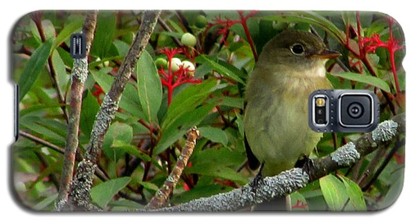 Hardly The Least Least Flycatcher Galaxy S5 Case